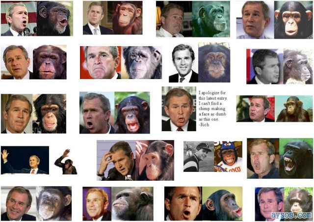 George Bush looks like a monkey