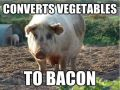 Pigs Convert Vegetables to Bacon