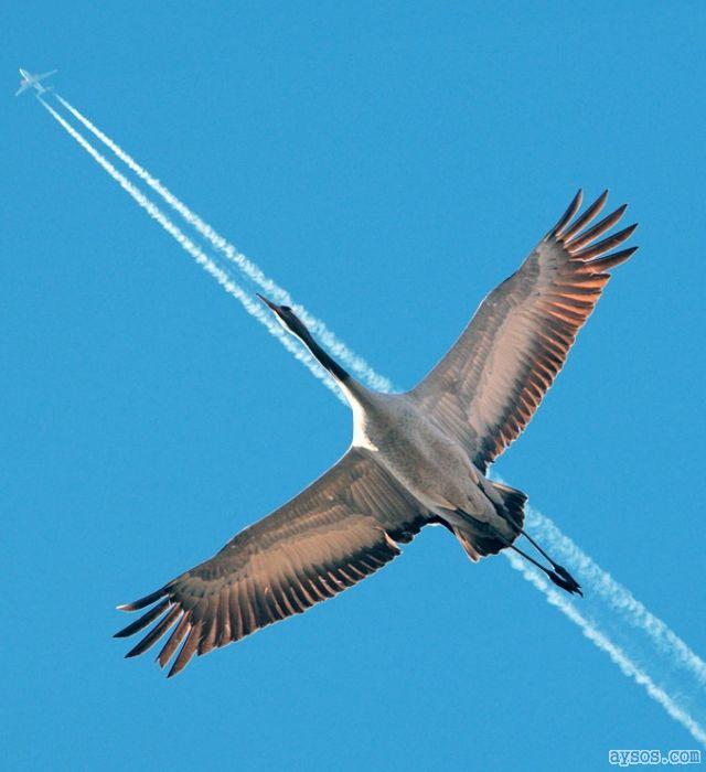 A bird, no a plane