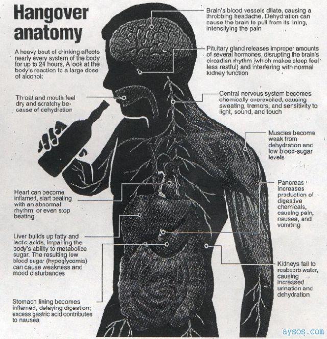 Anatonmy of a Hangover