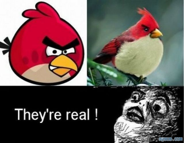 Angry Birds are real and scary