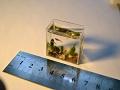 World record smallest aquarium